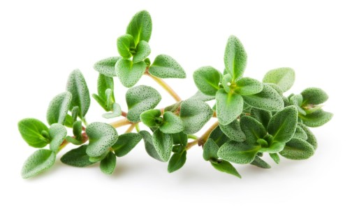 herbs to fight diabetes