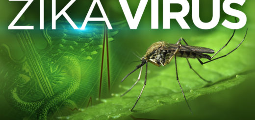 Zika virus, west nile fever, chikungunya, Dengue vaccination, NSAIDs, Aedes mosquito