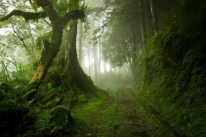 mystical forest, mystic forest, mysterious forest, mystical picture, mystical photo, stairs in the forest mystery, mythical forests, mystical forest fairies, mystical forest pictures, mystical forests, forest floors, are there forests in spain